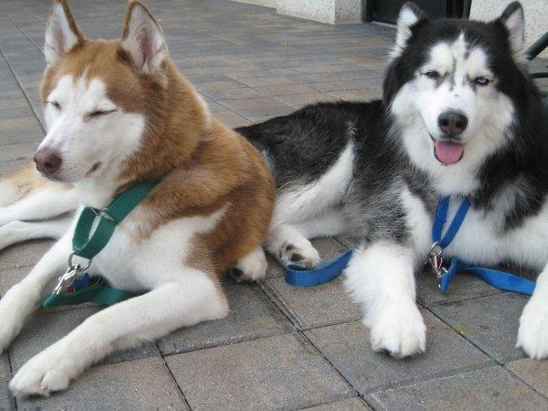 Caine and Maxx 1
