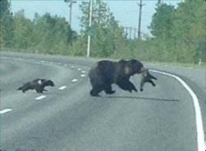 CW bears