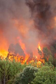 Forest Wild Fire