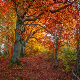 Fall begins in the Northern Hemisphere. Photo credit: Andrew Mayovskyy via istrockphoto.com
