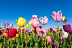 Spring arrives in the Southern Hemisphere. Photo credit: Kanonsky via istockphoto.com