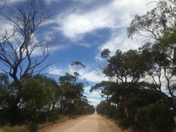 Typical farm road near Alford SA.jpg